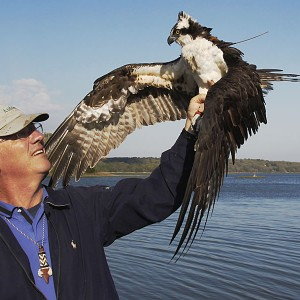 Osprey-released-vandegraaff